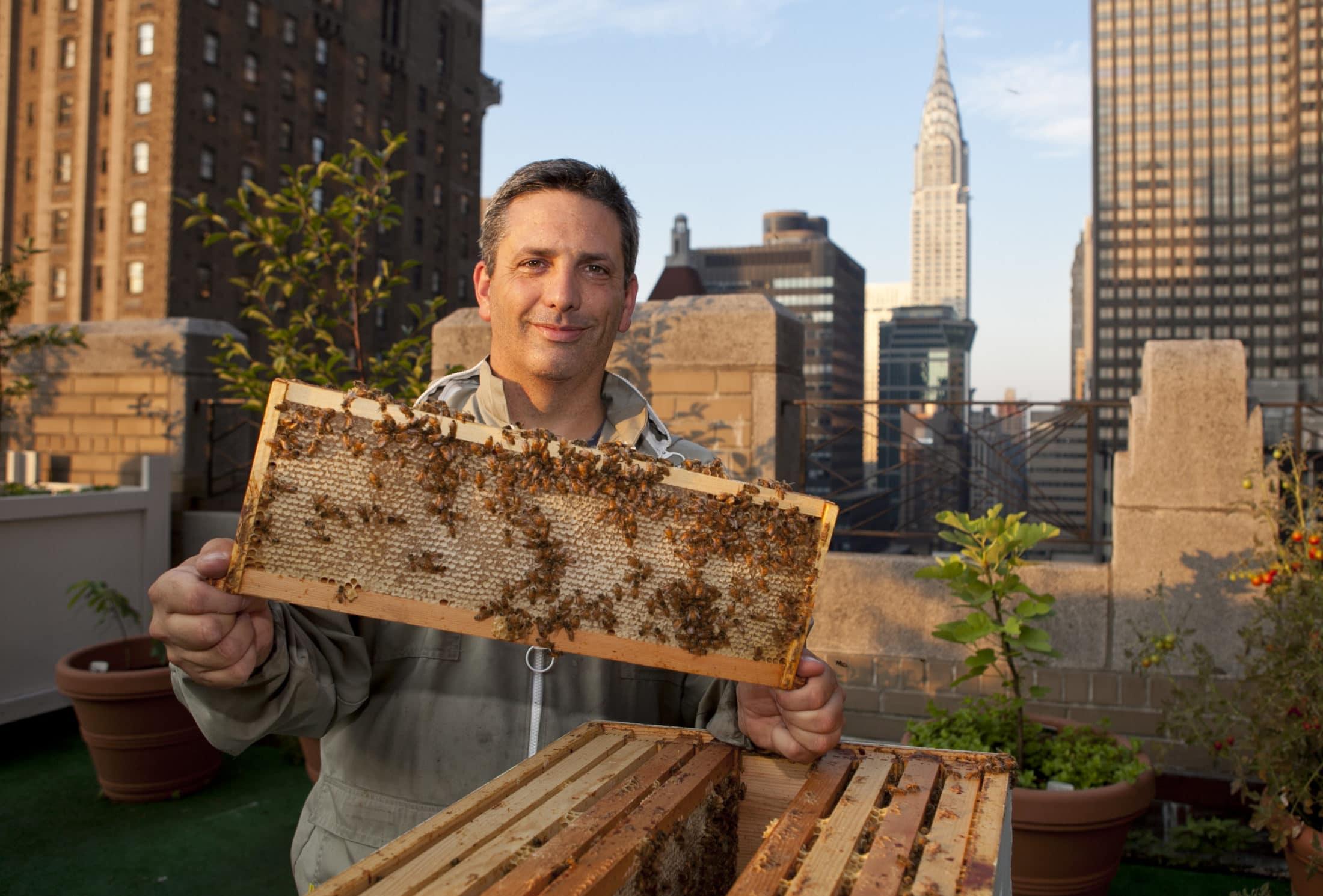 Gerillaakciókból új jelenség: Városi méhészek, szevasztok!